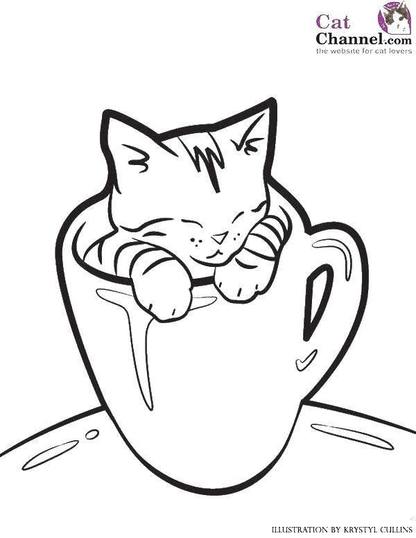 Раскраска Котёнок в кружке Скачать Животные, котёнок.  Распечатать ,Коты и котята,