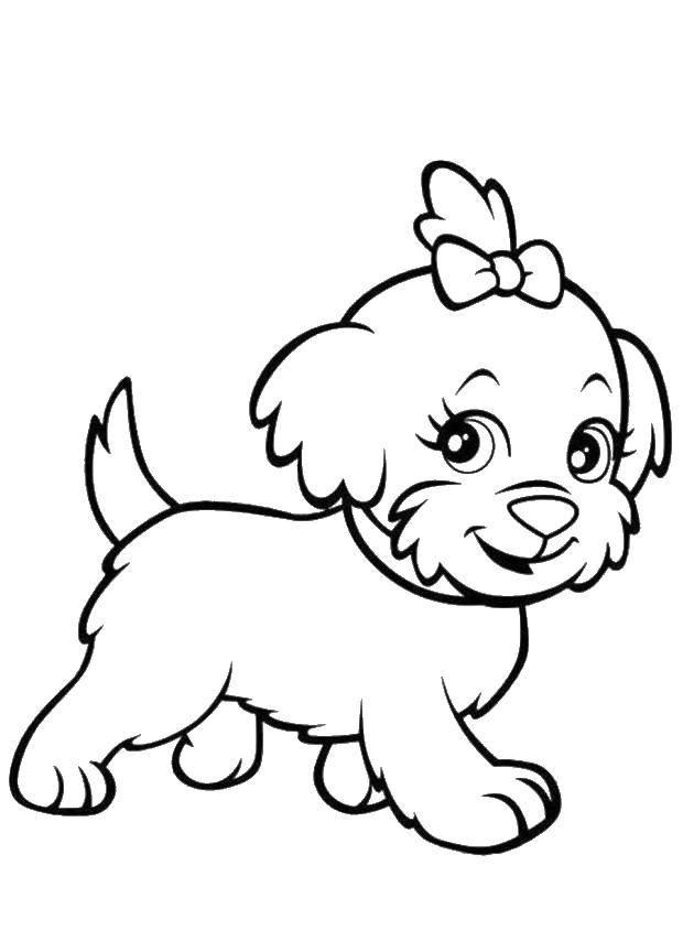 Раскраска Милая собачка с бантиком. Скачать Животные, собака.  Распечатать ,домашние животные,