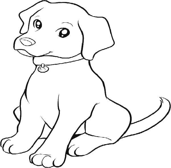 Раскраска Милый верный пёс. Скачать Животные, собака.  Распечатать ,домашние животные,