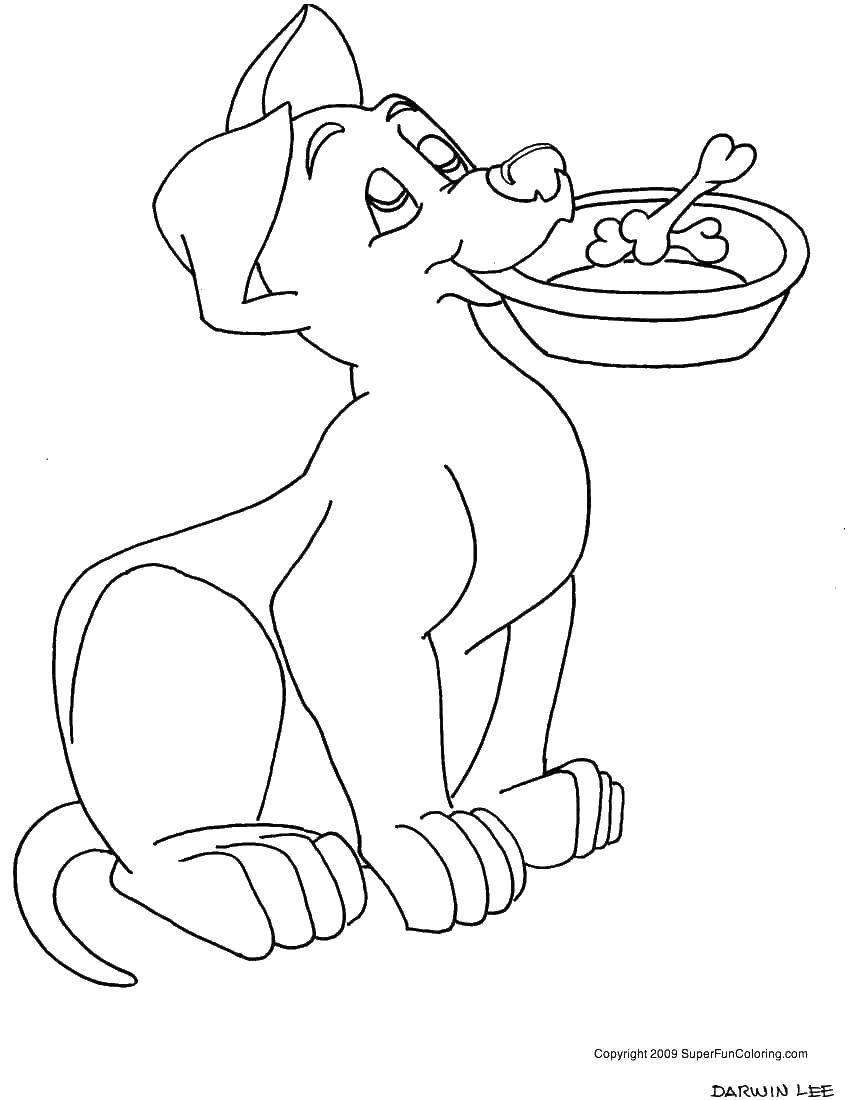 Раскраска Пёс готов к обеду. Скачать Животные, собака.  Распечатать ,домашние животные,