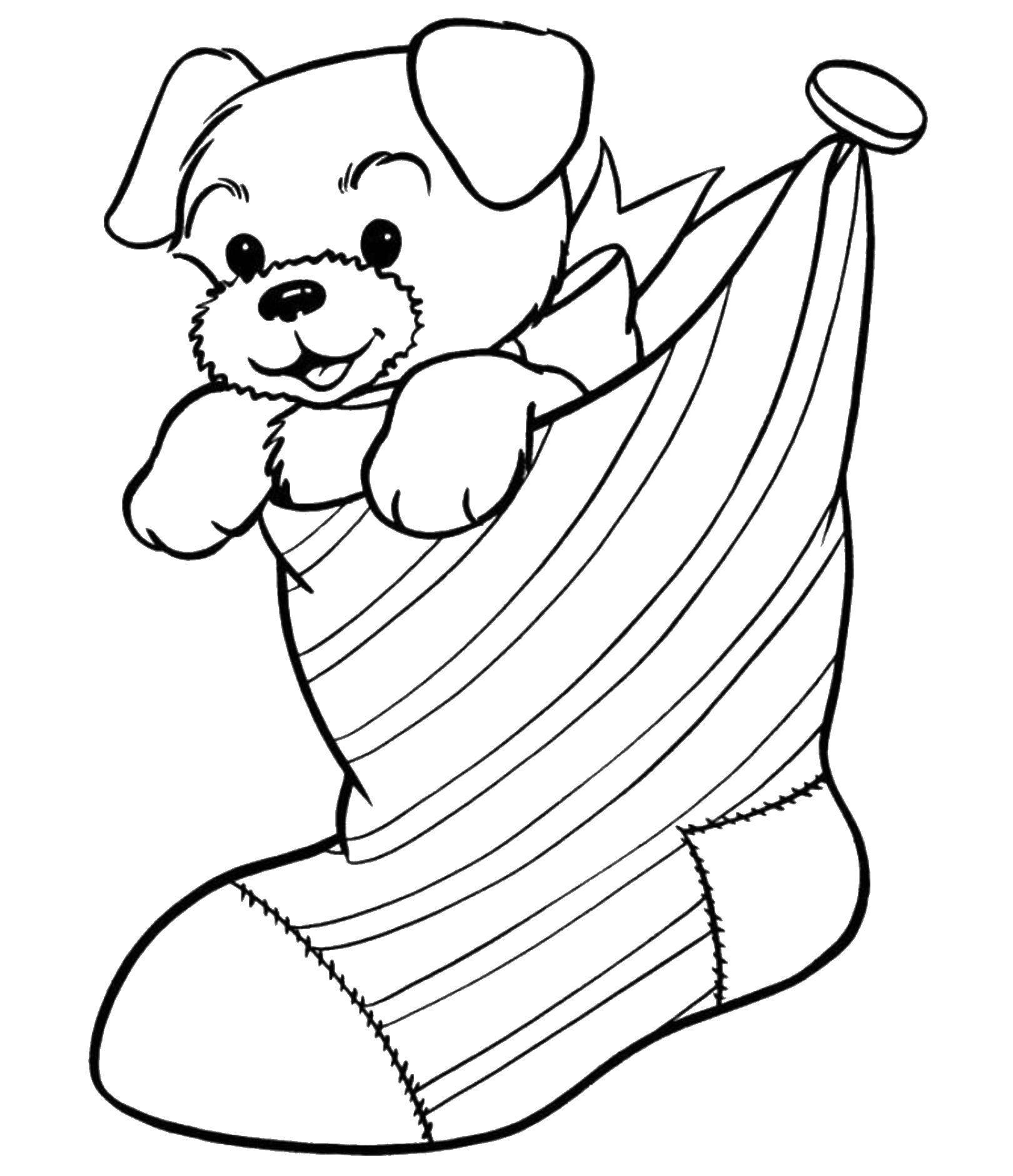 Раскраска Собачка в носочке Скачать домашние животные, собачки, собака.  Распечатать ,домашние животные,