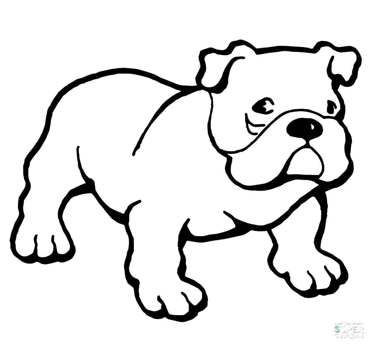Раскраска Собака Скачать домашние животные, собачки, собака.  Распечатать ,домашние животные,