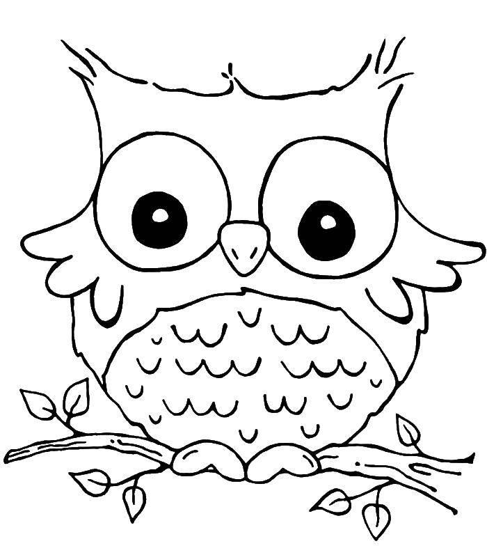 Раскраска Сова села на веточку Скачать Птицы, сова.  Распечатать ,птицы,