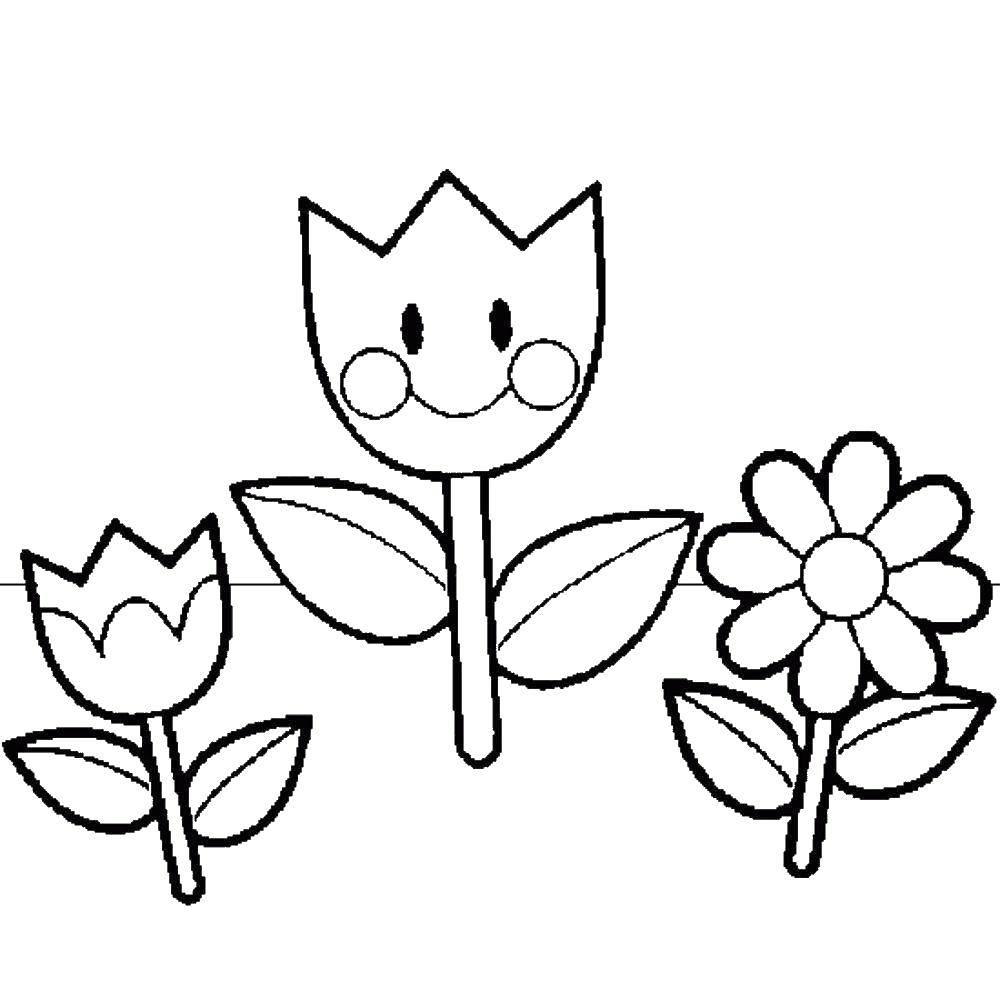 Раскраска Цветочки Скачать ,цветы, растения, бутоны, лепестки,.  Распечатать