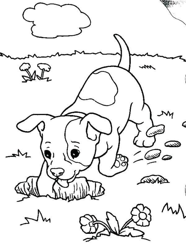 Название: Раскраска Капание ямки. Категория: домашние животные. Теги: Животные, собака.