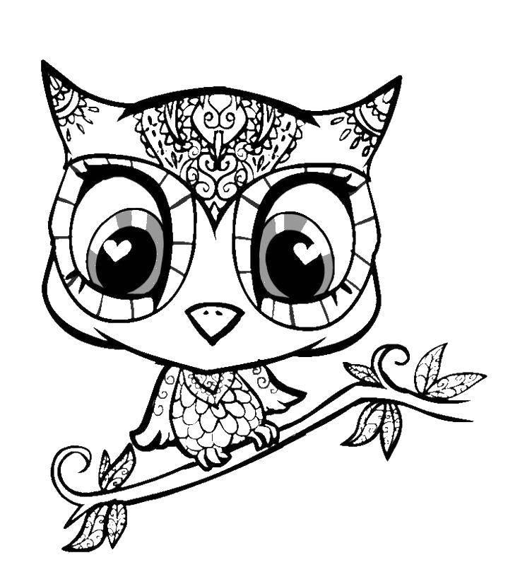 Раскраска Маленький совенок и ветка Скачать совенок, ветка, глазки.  Распечатать ,птицы,