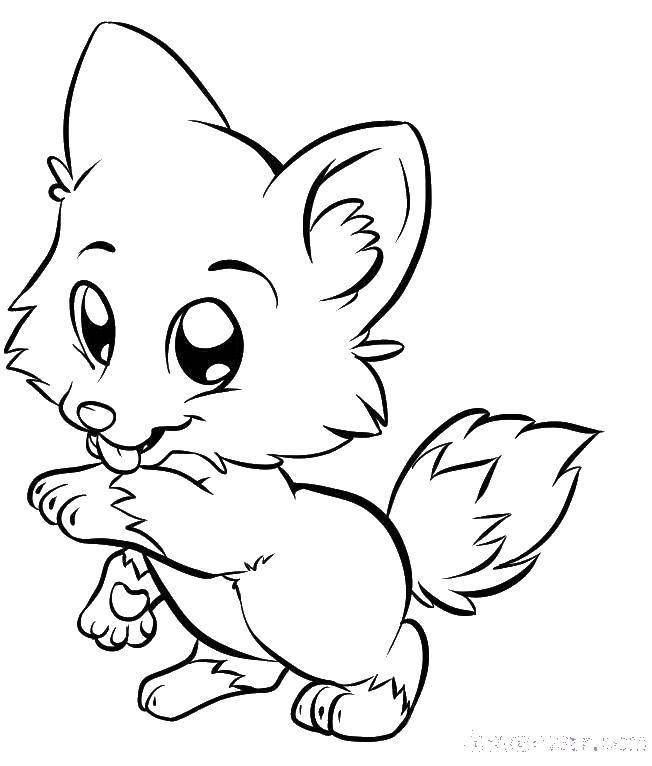 Раскраска Маленький волчонок Скачать волчонок, лапки, хвостик.  Распечатать ,животные,