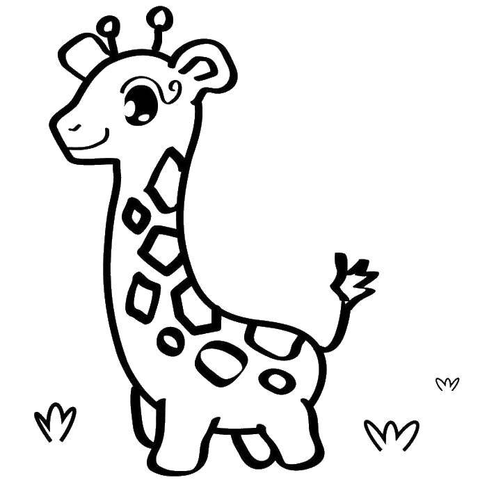Раскраска Маленький жирафик Скачать жираф, трава, ушки.  Распечатать ,животные,