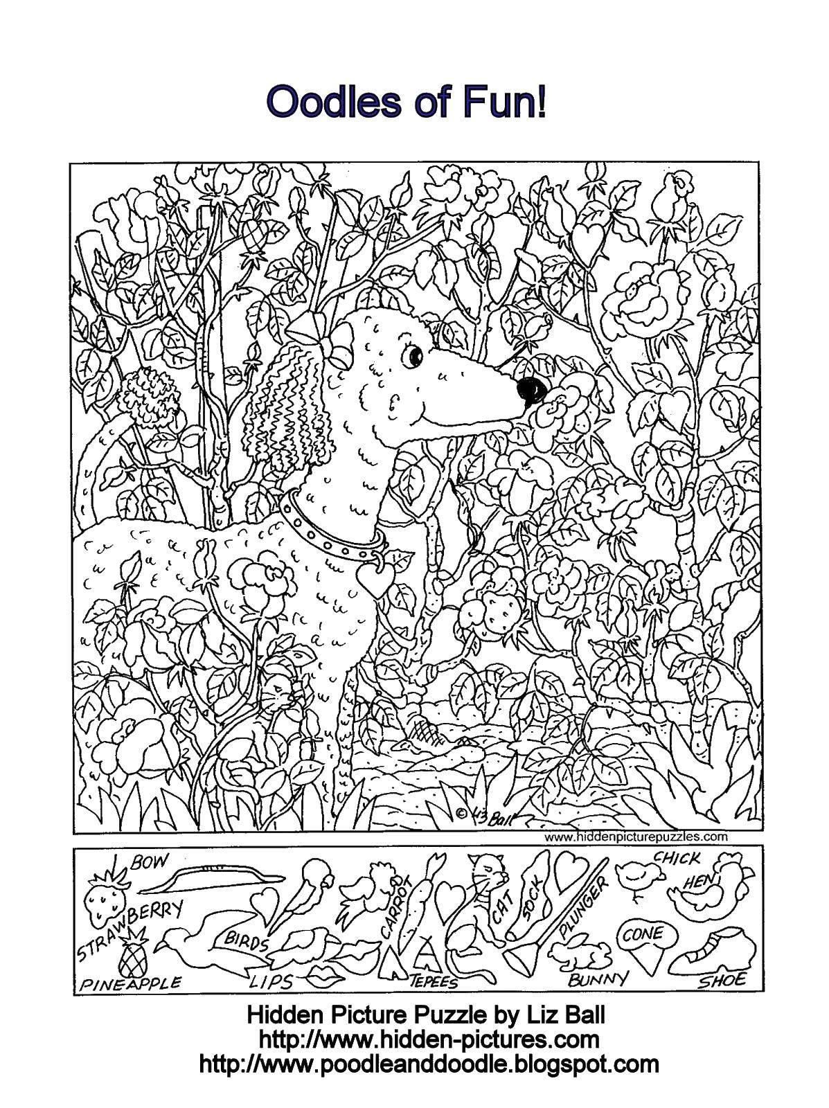 Раскраска Пудель с ошейником Скачать ,пудель, бантики, ошейник,.  Распечатать