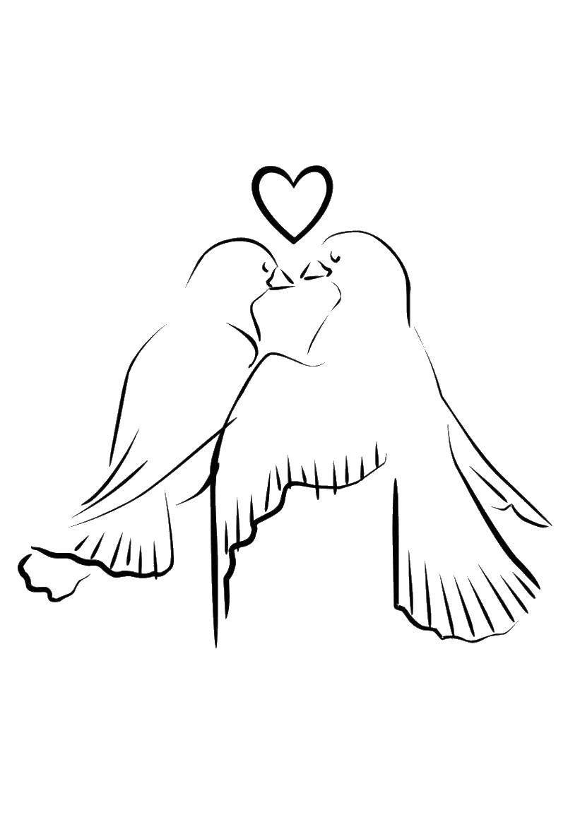 Раскраска Сердце и два голубя. Скачать голубь, поцелуй, сердце.  Распечатать ,Свадьба,