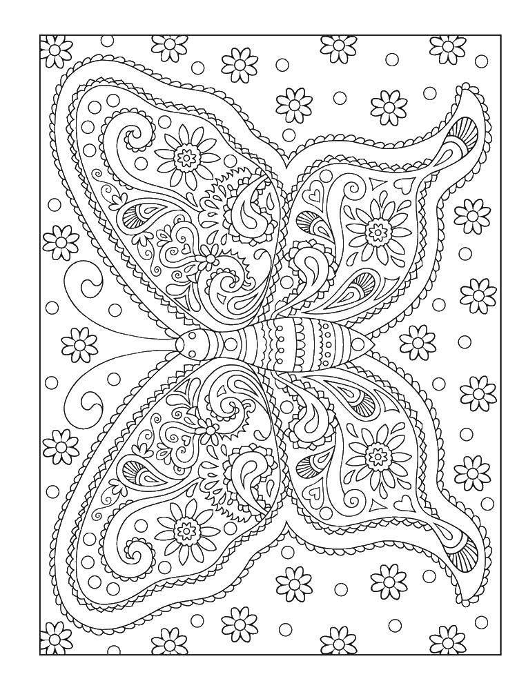 Раскраска Узоры и бабочка. Скачать бабочка, крылья, узоры.  Распечатать ,бабочки,