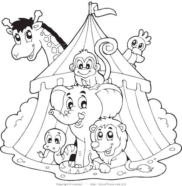 Раскраска Животные в цирке Скачать ,цирк, лев, слон, жираф,.  Распечатать