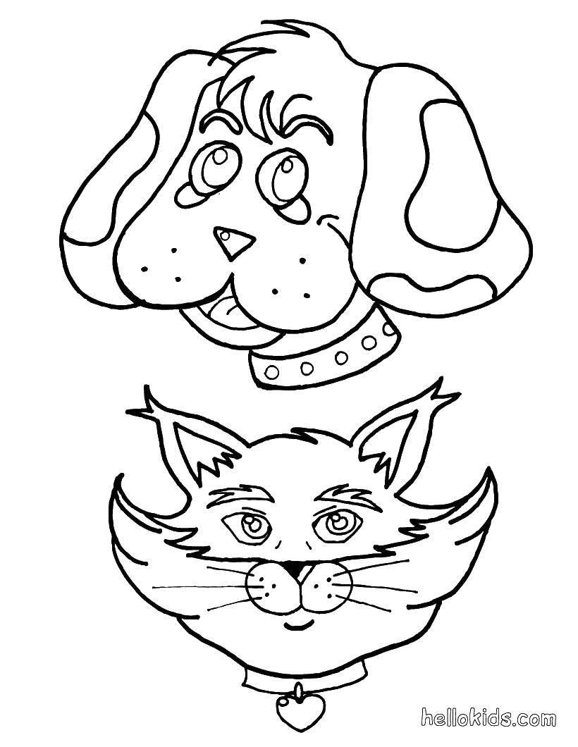 Раскраска Голова кошки и собака Скачать собака, кошка, ошейники.  Распечатать ,раскраски,