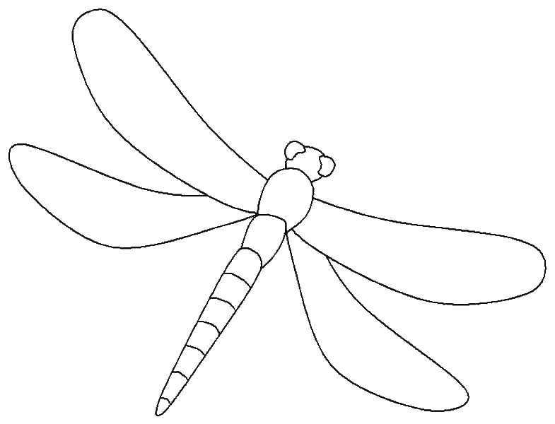 Раскраска Контур стрекозы Скачать контур, стрекоза, крылья.  Распечатать ,Насекомые,