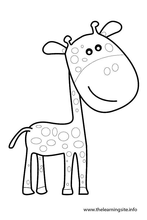 Раскраска Маленький пятнистый жираф Скачать жираф, хвост, уши.  Распечатать ,Контур жирафа для вырезания,