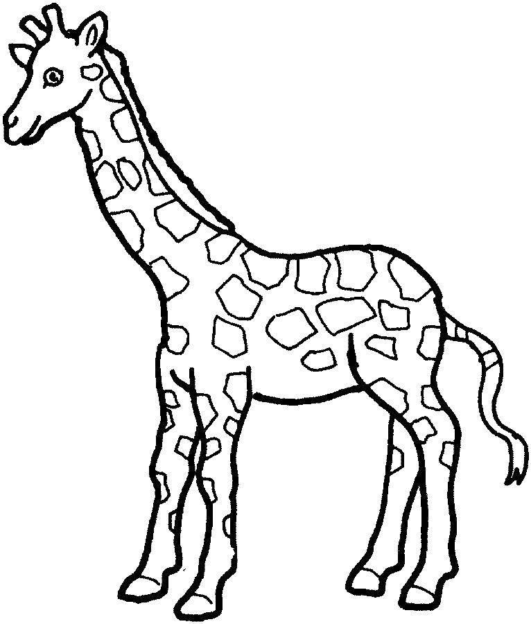 Раскраска Маленький жираф Скачать жирафы, жираф, животные.  Распечатать ,Контур жирафа для вырезания,