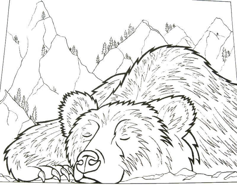 Раскраска Медведь спит в лесу Скачать ,медведь, лес, сон,.  Распечатать