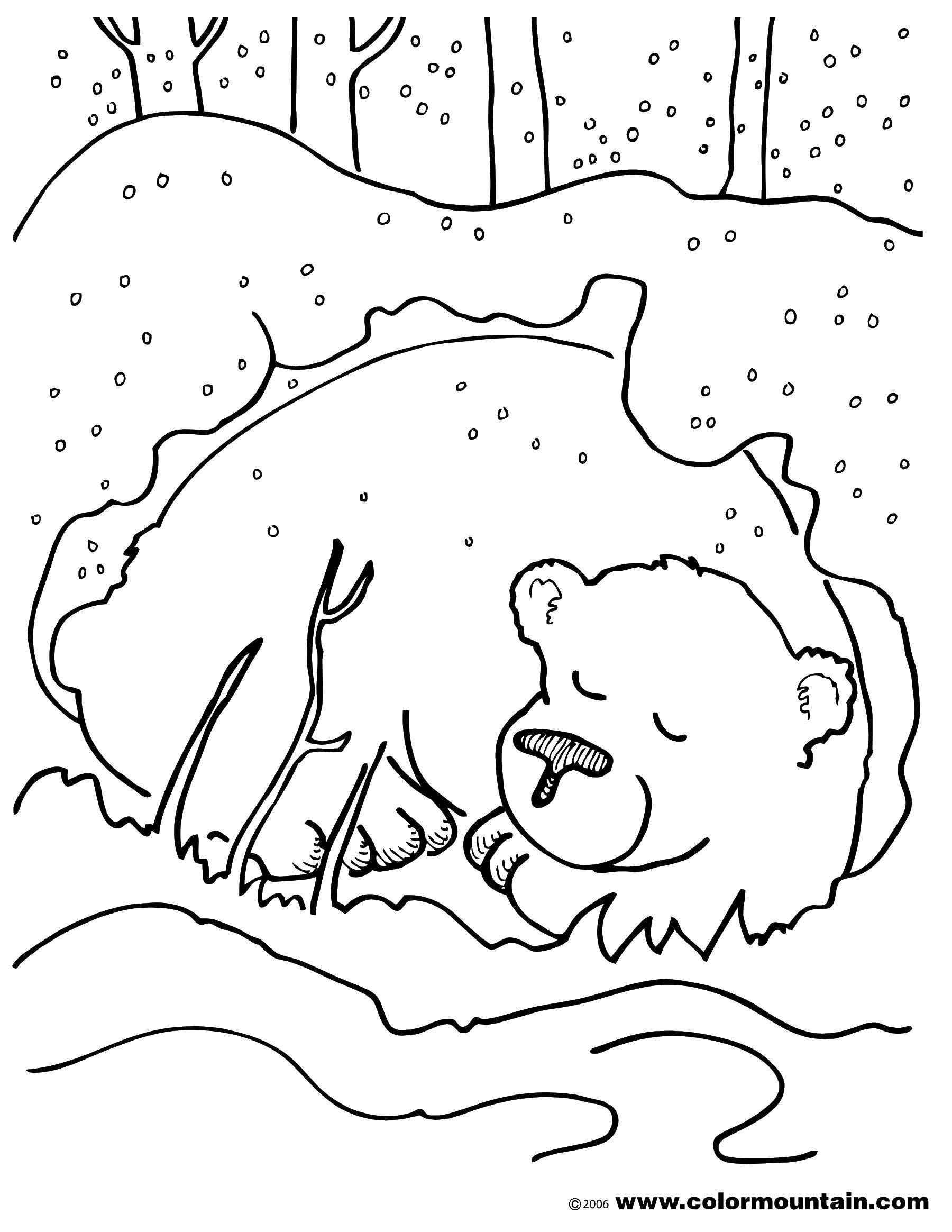 Раскраска Мишка под снегом Скачать животные, медведи, зима, снег.  Распечатать ,Животные,