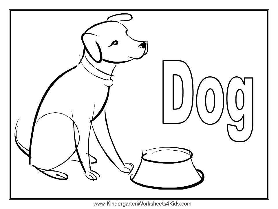 Раскраска Миска и собака Скачать собака, миска, ошейник.  Распечатать ,собаки,