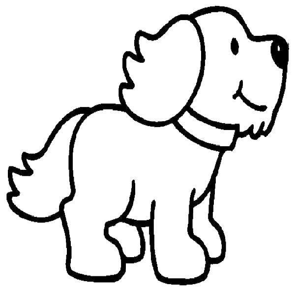 Раскраска Ошейник и щеночек Скачать щенок, ошейник, ушки.  Распечатать ,собака,