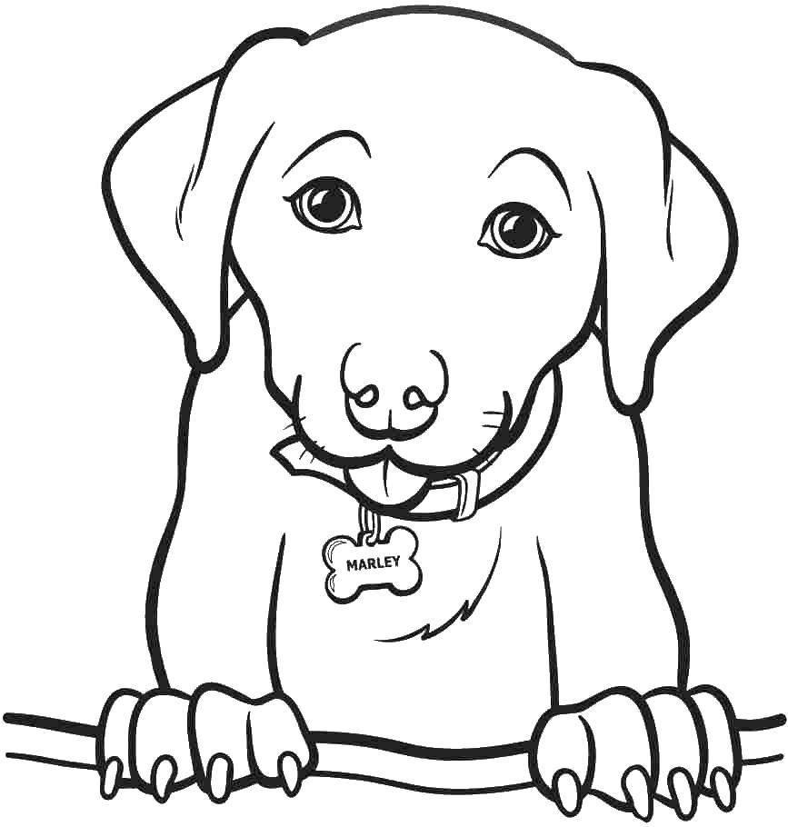 Раскраска Ошейник с косточкой и собака Скачать собака, ошейник, кость.  Распечатать ,собаки,