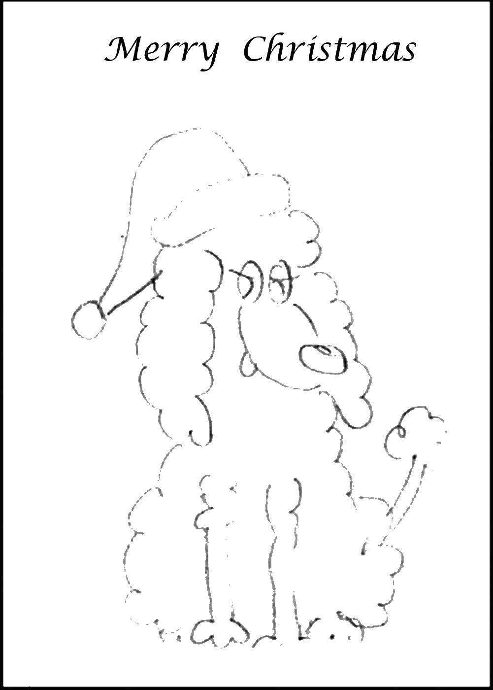 Раскраска Пудель в рождественском колпаке Скачать пудель, колпак, хвост.  Распечатать ,Рождество,