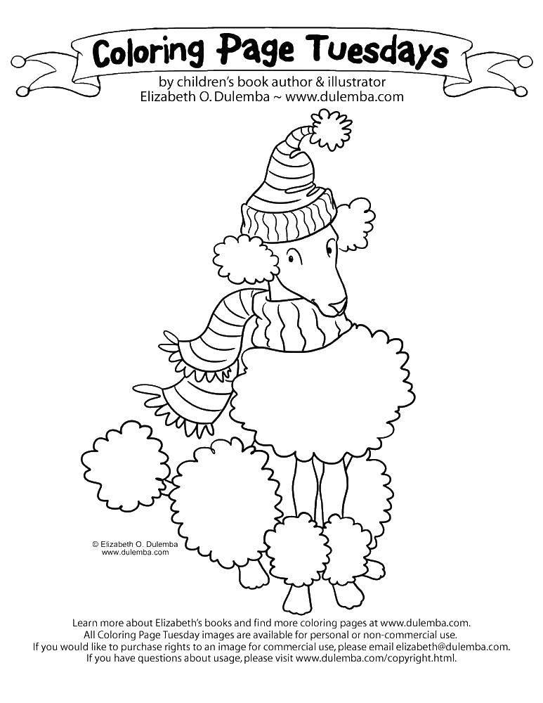 Раскраска Пудель в шапке и шарфе. Скачать пудель, шапка, шарф.  Распечатать ,Рождество,