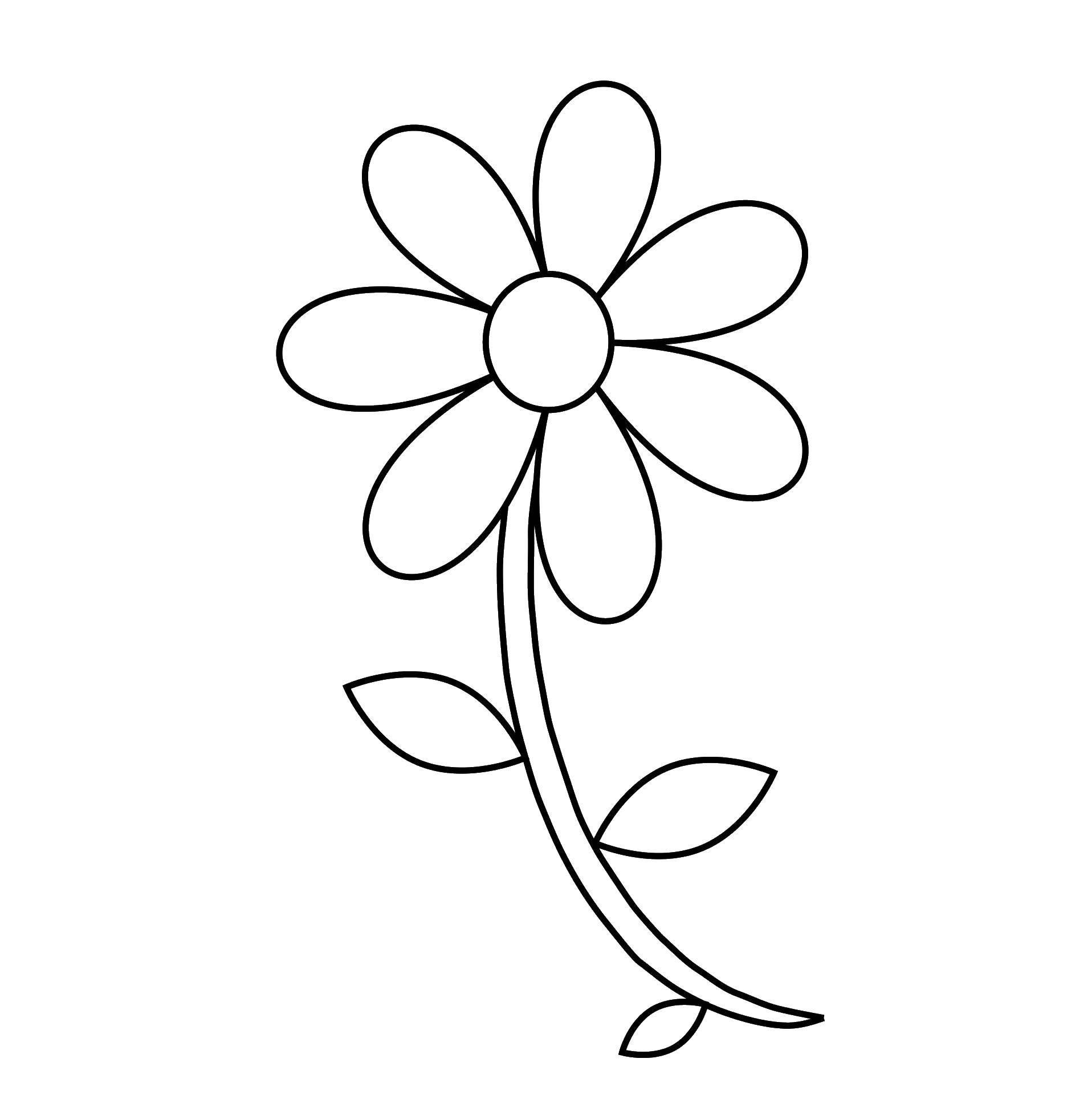 Раскраска Ромашка на стебельке Скачать ромашка, стебель, листья.  Распечатать ,Контуры цветка для вырезания,