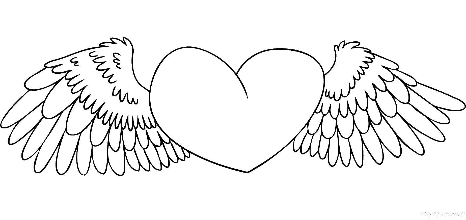 Раскраска Сердце и крылья с перьями. Скачать крылья, сердце.  Распечатать ,раскраски,