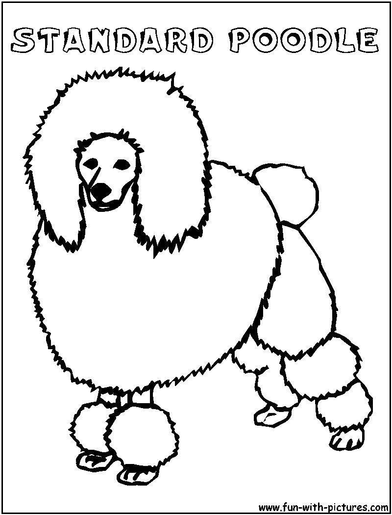 Раскраска Собака пудель Скачать пудель, лапы, хвост.  Распечатать ,собака,