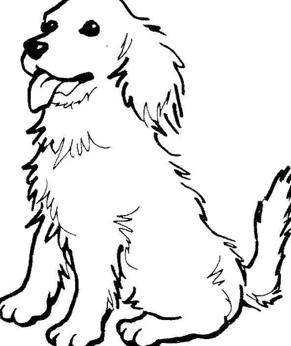 Раскраска Собака с вынутым языком Скачать собака, язык, уши.  Распечатать ,собаки,