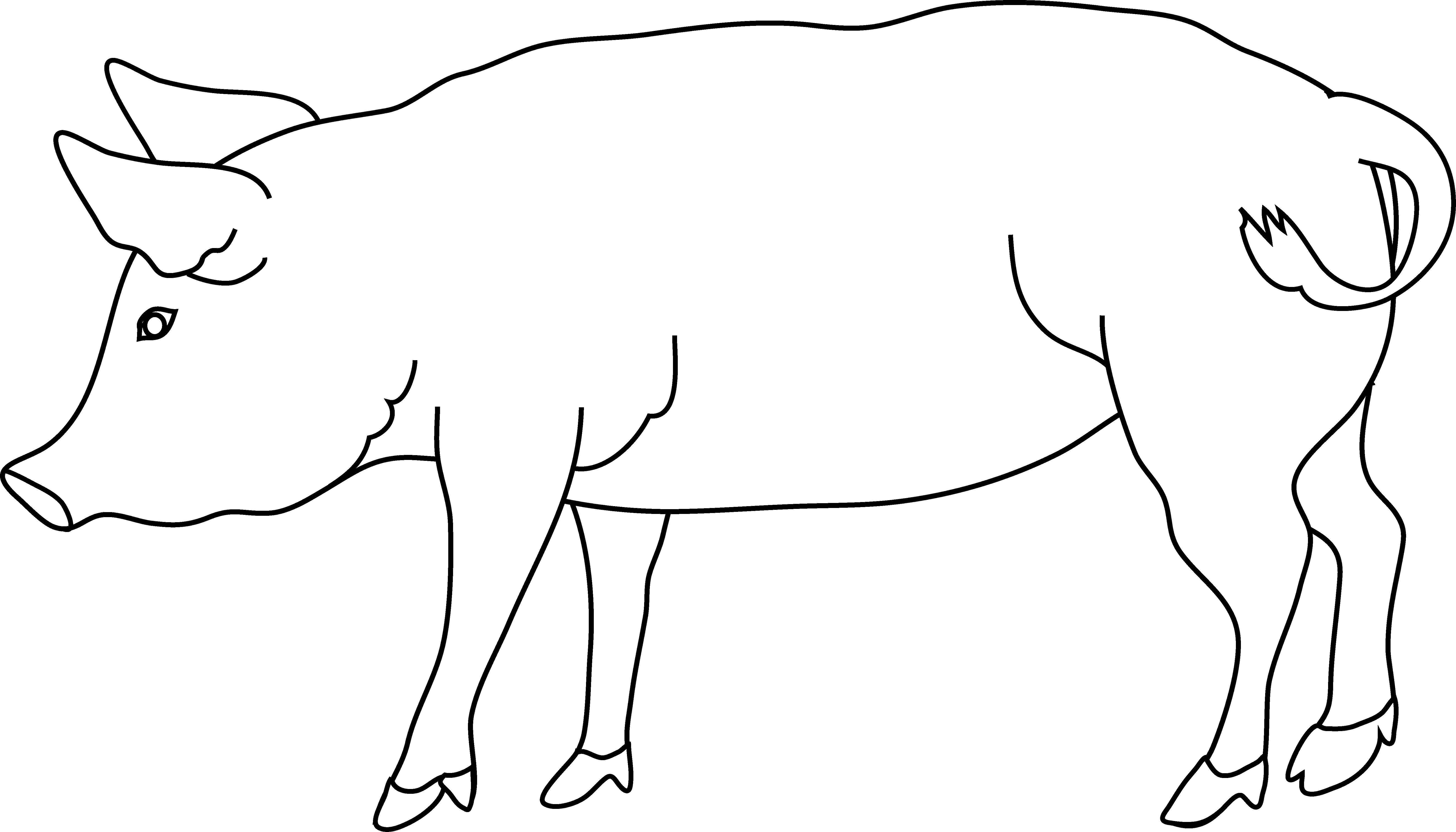 Раскраска Свинья. Скачать свинья, хвост, ушки.  Распечатать ,домашние животные,