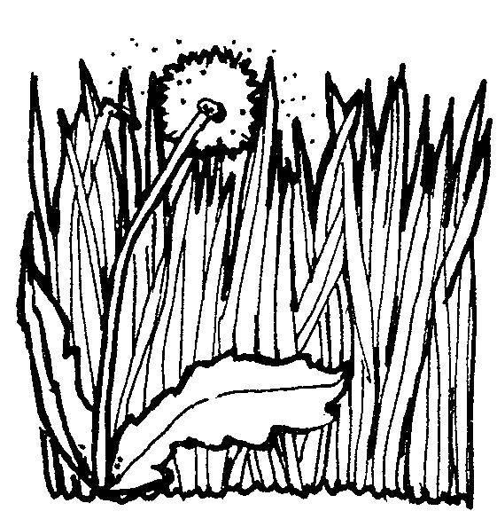 Раскраска Контуры травы для вырезания Скачать ,подводная лодка, море, акулы,.  Распечатать