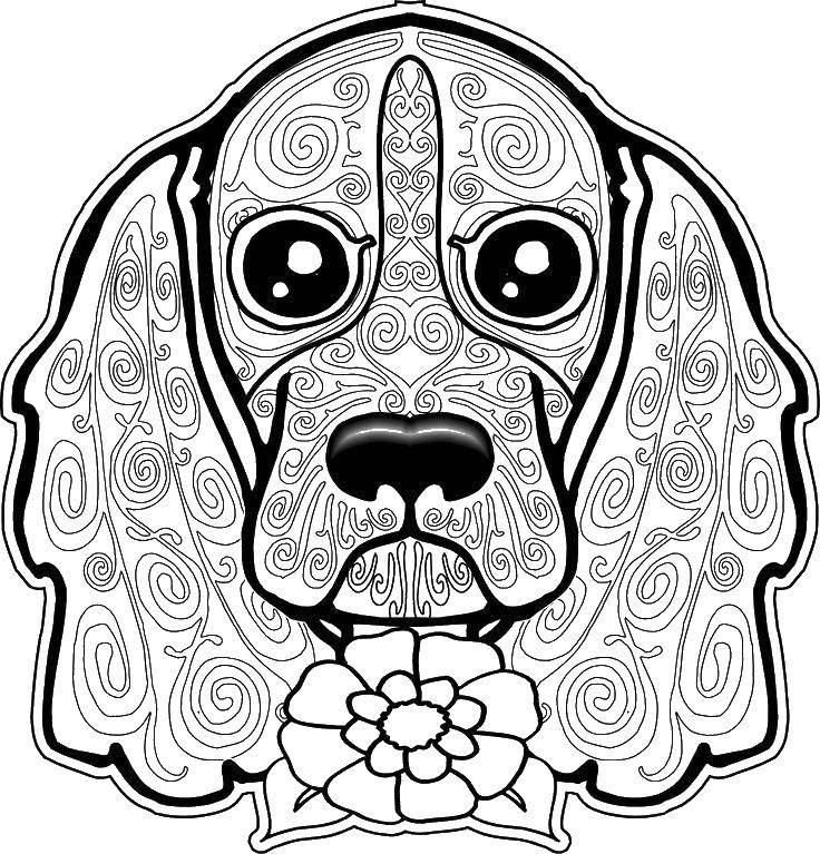 Раскраска Цветок и собака Скачать собака, цветок, узоры.  Распечатать ,собаки,