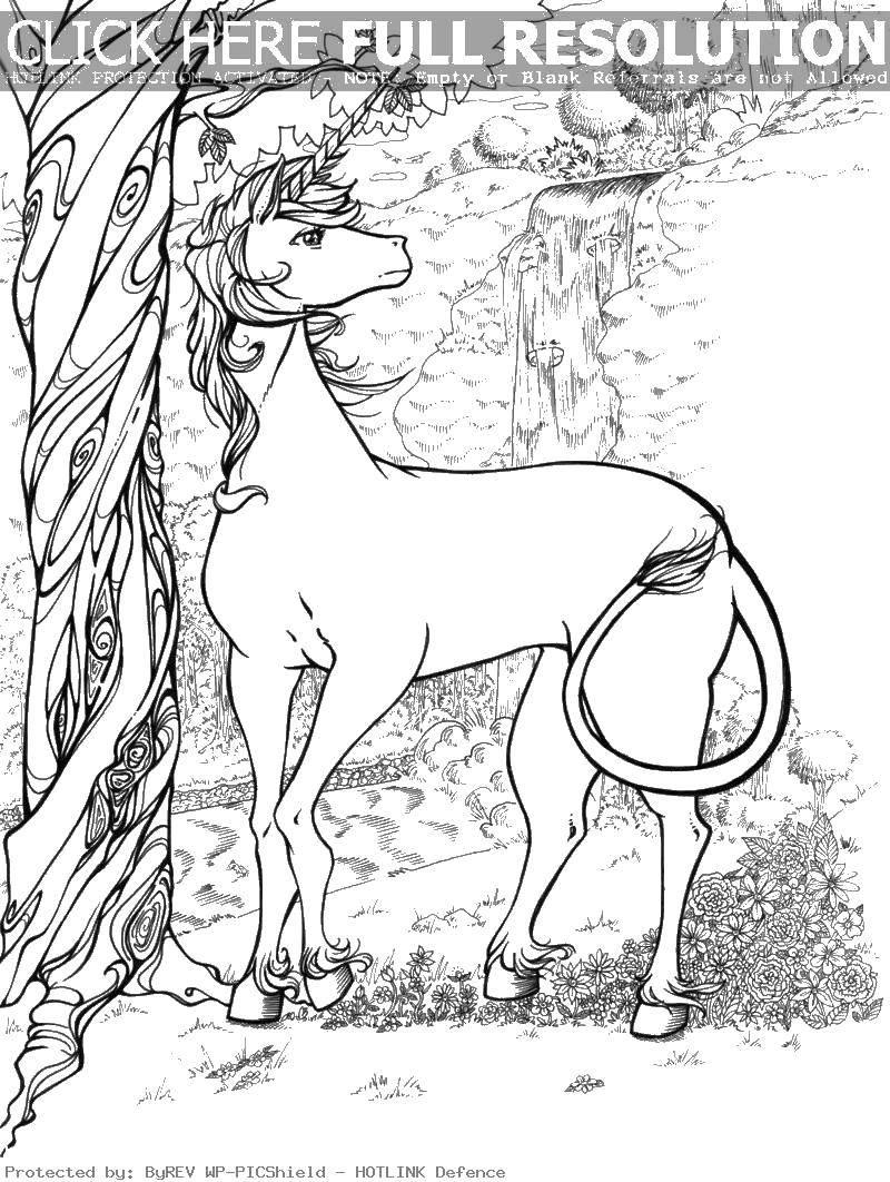 Раскраска Единорог Скачать Единорог.  Распечатать ,Волшебные создания,