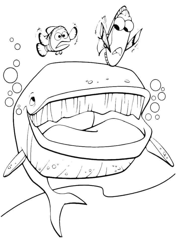 Раскраска Кит и рыбки. Скачать кит, рыба, пузыри.  Распечатать ,кит,