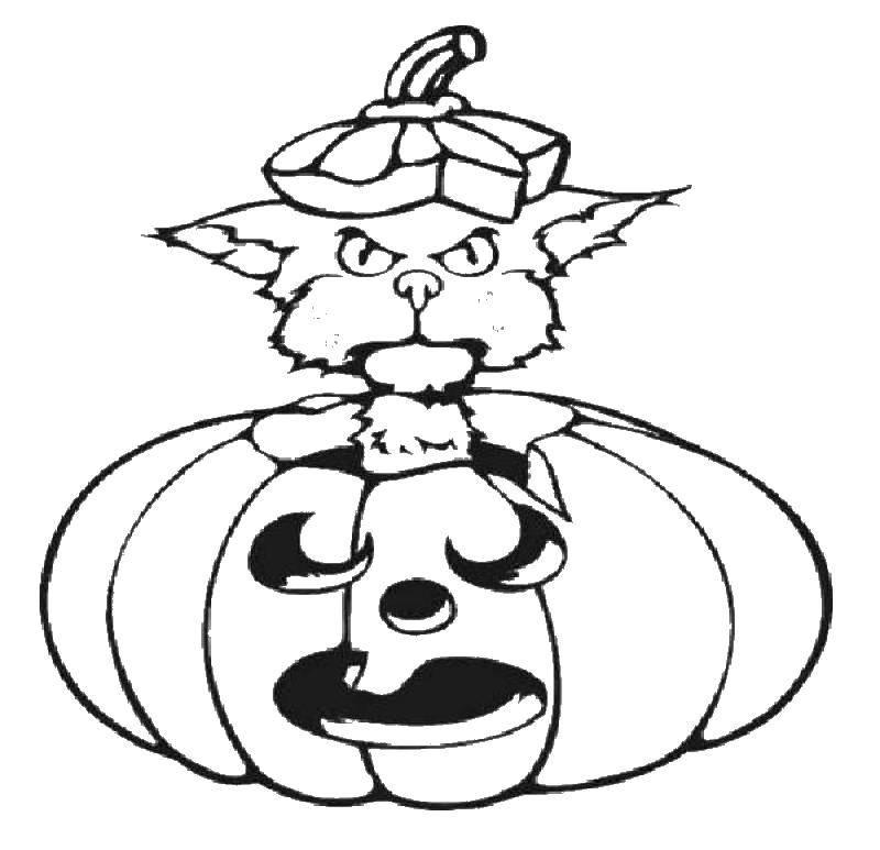 Раскраска Кот и тыква. Скачать тыквы, хэллоуин, кошки, кот.  Распечатать ,тыква на хэллоуин,