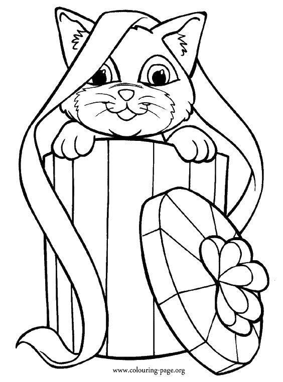 Раскраска Котик в коробке. Скачать Подарки, праздник.  Распечатать ,раскраски,