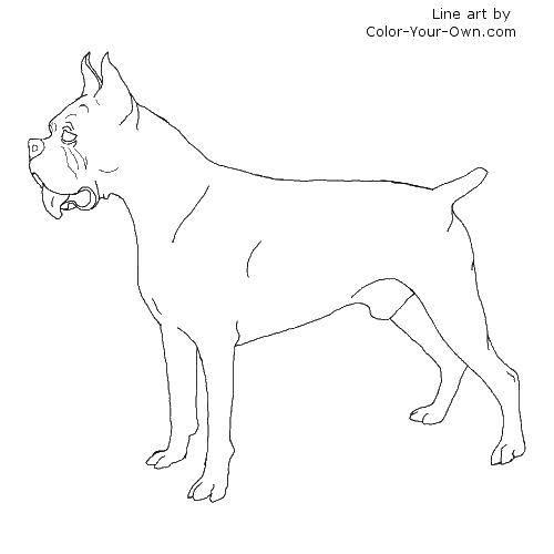 Раскраска Красивый пёс. Скачать Животные, собака.  Распечатать ,Животные,
