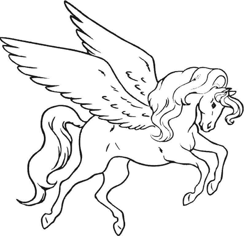 Раскраска Крылатый конь и длинный хвост Скачать конь, крылья.  Распечатать ,раскраски,