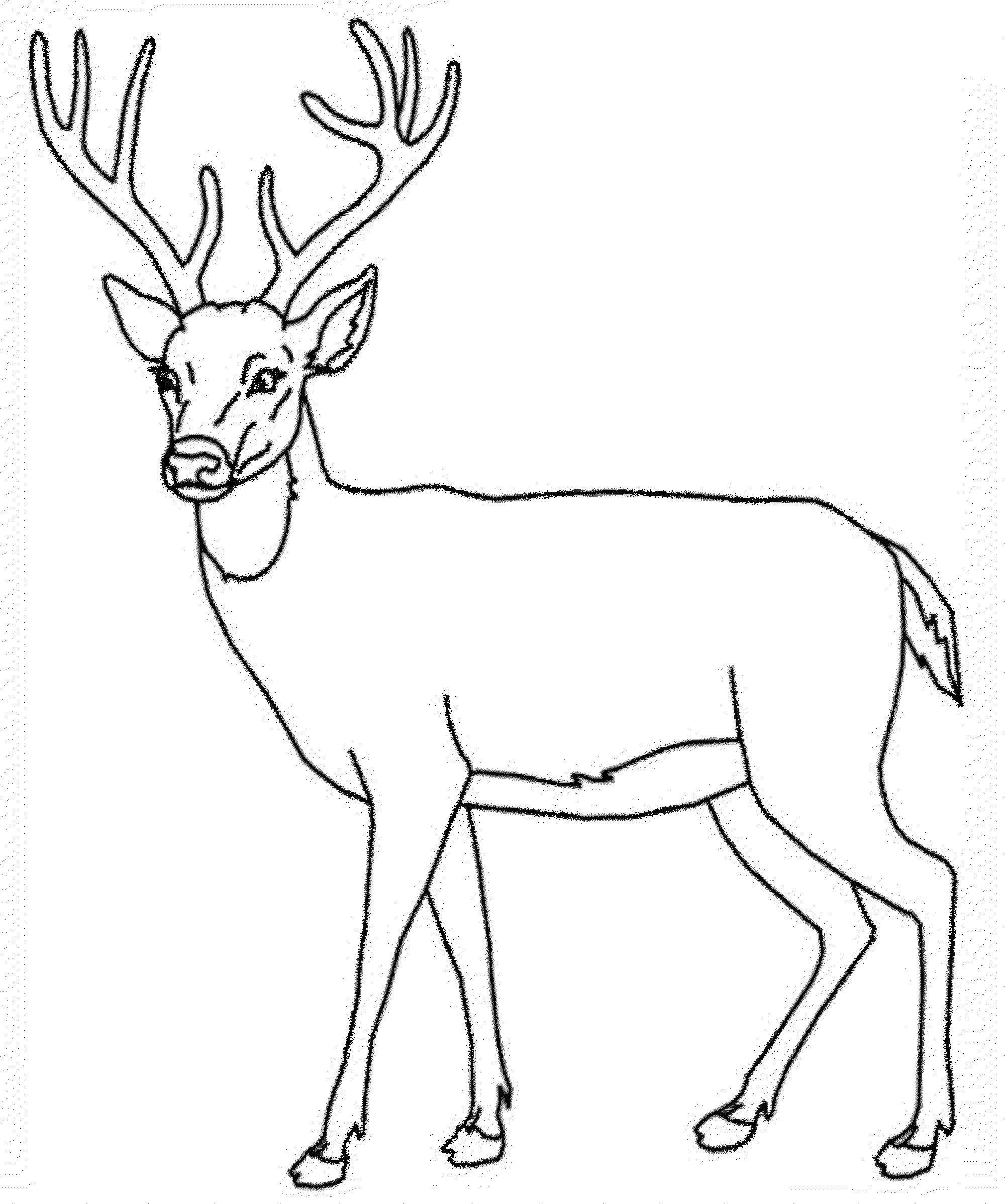 Раскраска Олененок Скачать животные, олени, рога.  Распечатать ,Животные,