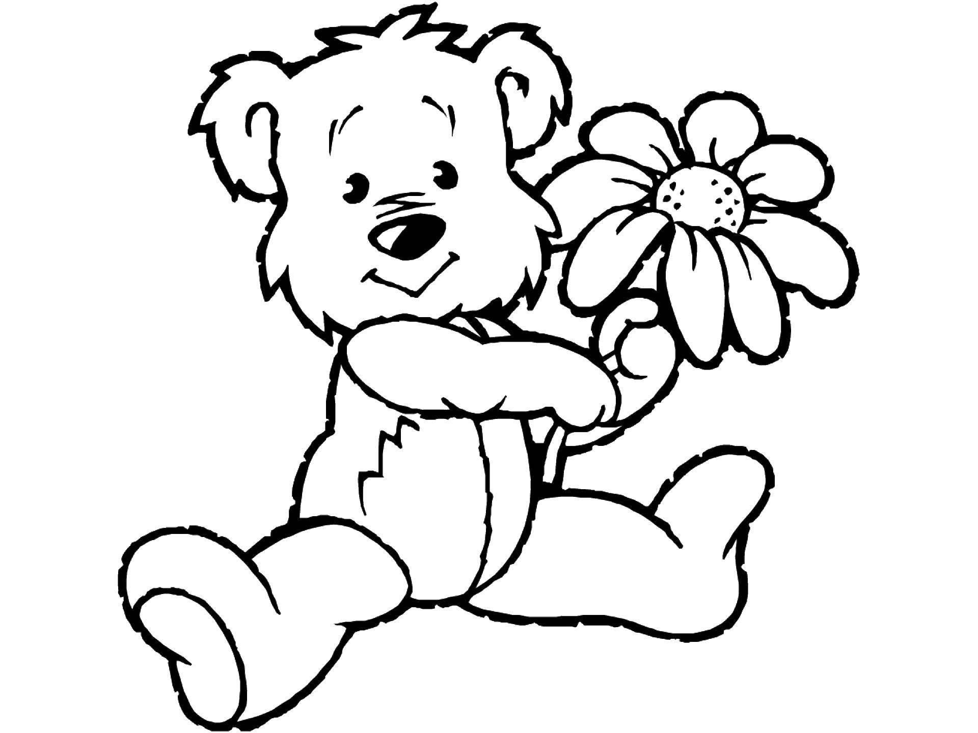 Раскраска Плюшевый мишка и цветок. Скачать мишка, цветок.  Распечатать ,раскраски,