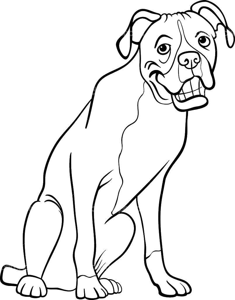 Раскраска Собака и зубы. Скачать собака, хвост, уши.  Распечатать ,собаки,