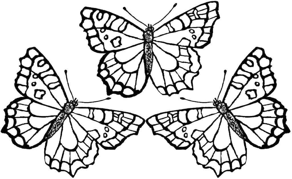 Раскраска Три бабочки. Скачать бабочки, крылышки, насекомые.  Распечатать ,бабочки,