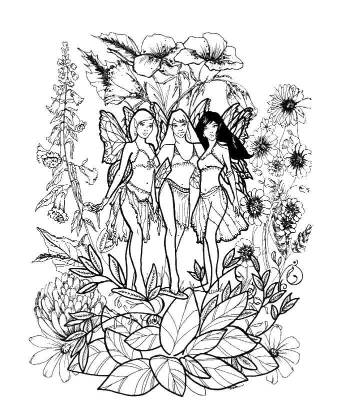 Раскраска Три феи цветов Скачать Фея, сказка, цветы.  Распечатать ,Фэнтези,