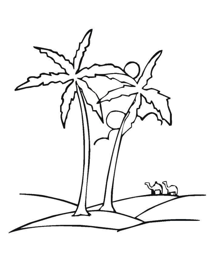 Раскраска Верблюды мимо пальм. Скачать Остров.  Распечатать ,остров,
