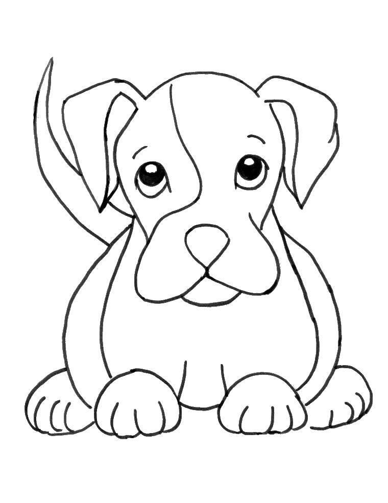 Название: Раскраска Верные глазки. Категория: Животные. Теги: Животные, собака.