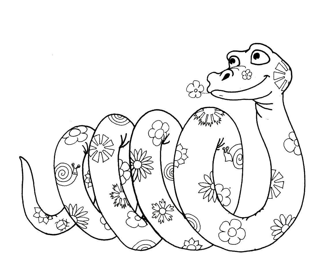 Раскраска Змея в цветочек. Скачать змея, цветочки.  Распечатать ,змея,