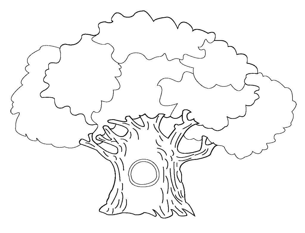 Раскраска Большой дуб. Скачать деревья, дуб.  Распечатать ,дерево,