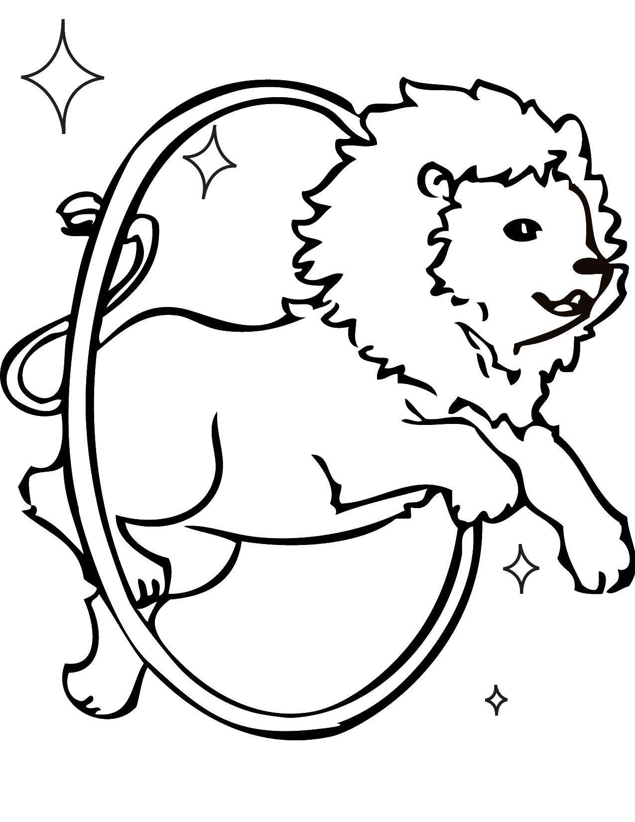 Раскраска Лев прыгет через обруч Скачать животные, львы.  Распечатать ,Животные,